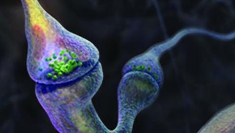 Sistema Nervoso, vulnerabilità e teratogenesi