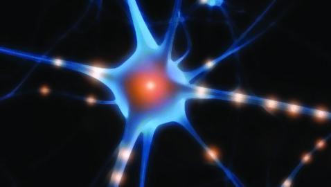 Cellule Staminali… Un futuro Promettente?