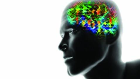 Memorie ed interferenze. Indagine su ciò che siamo
