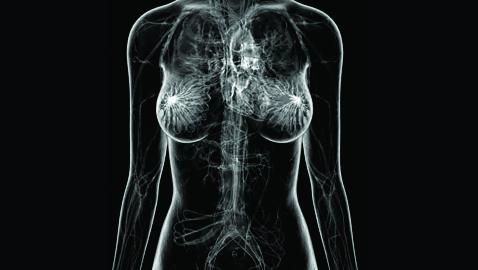 seno corpo