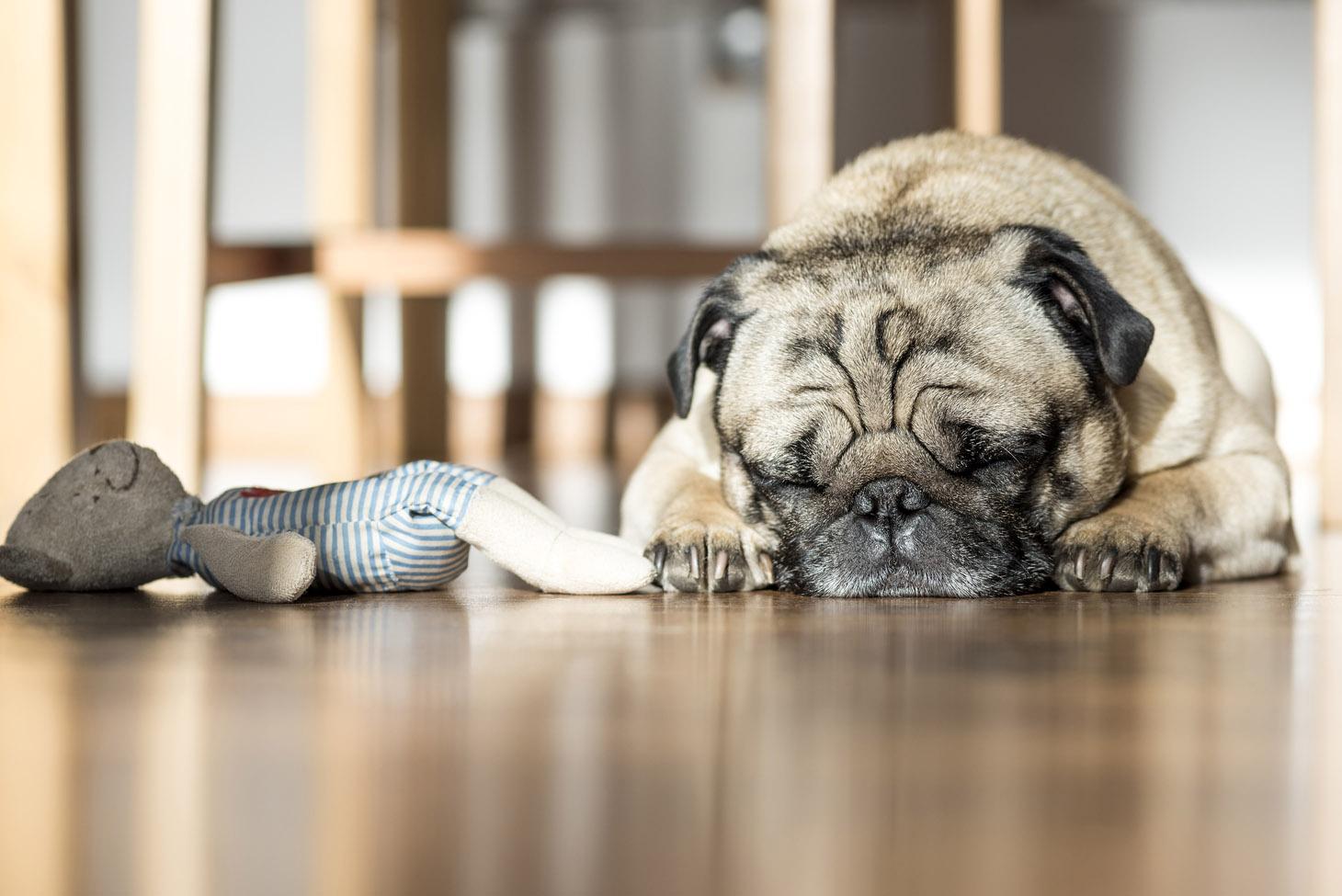 sleepy-dog